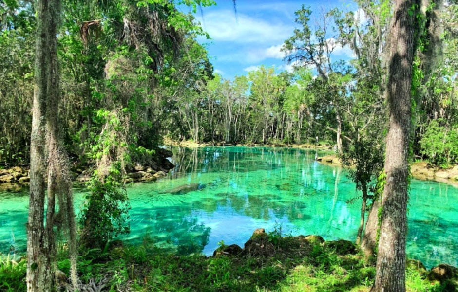 Vermillion Enterprises is Spring Hill Gold & Coin Buyer Serving Brooksville - gold dealer buyer coin shop buyer dealer cash for gold - serving brooksville, crystal river, dade city, floral city, holiday, homosassa, hudson, inverness, lecanto, land o lakes, lutz, new port richey, pasco, citrus, hernando, hillsborough, odessa, spring hill, wesley chapel, tampa, clearwater, zephyrhills, saint petersburg, jacksonville, miami, tallahassee - three sisters springs